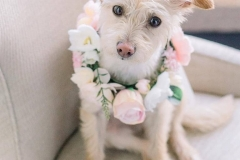 Pippen The Pup, the perfect flower girl!