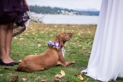 Rumor_dog wearing lavender flower collar 1