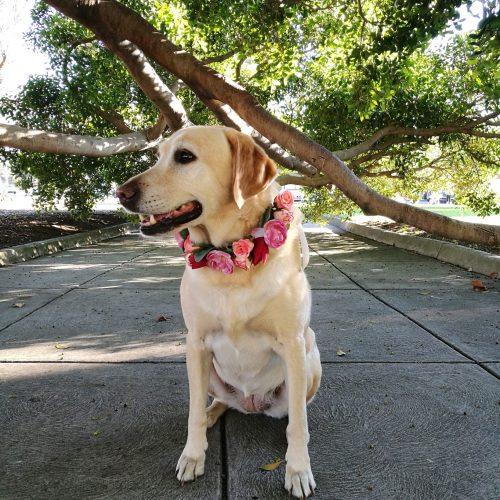 dog wearing flower crown