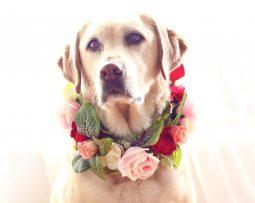Dog Rose green leaves Flower Collar