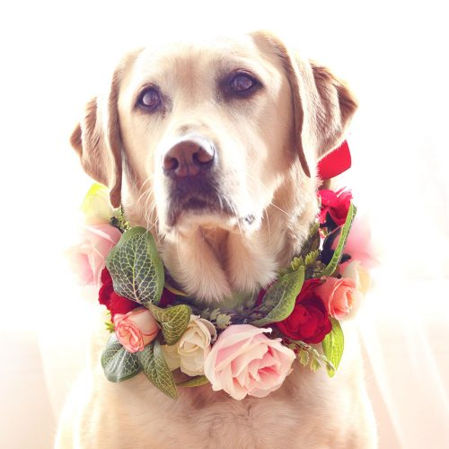 Dog Rose green leaves Flower Collar