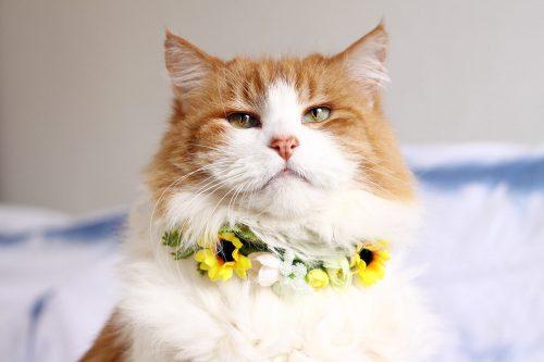 cat wearing flower collar