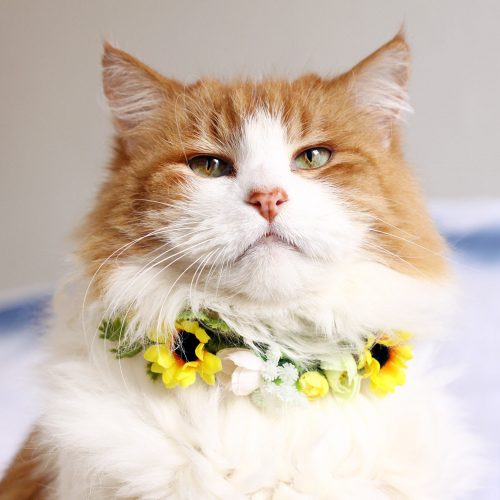 cat wearing flower collar