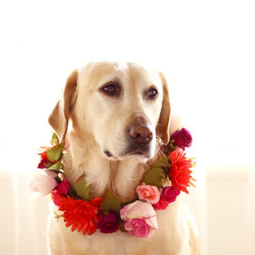 Red Dog Flower Collar Wreath