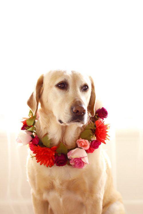 Red Dog Flower Collar Wreath